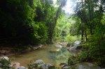 Khao Sok Rain-forest.